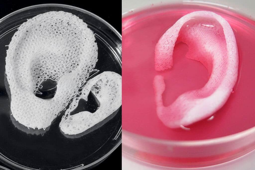 Bioprinting in Health Science